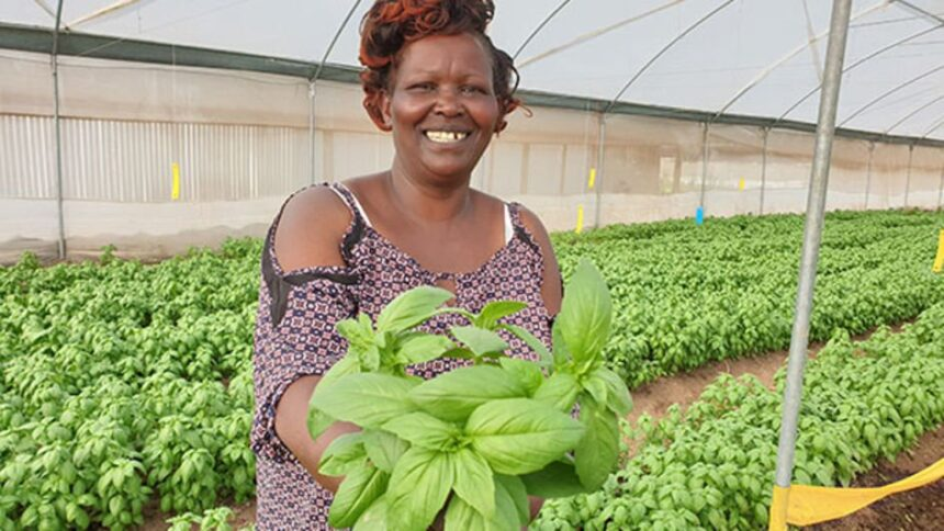 Kenyan youth urged to venture into lucrative herbs farming