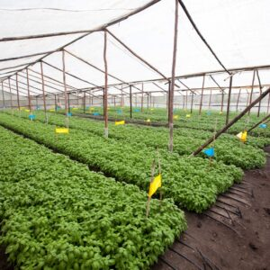MARKUP Supporting The Herbs Value Chain