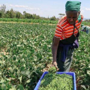 Inform Farmers, Strengthen Extension Services – KAP Survey