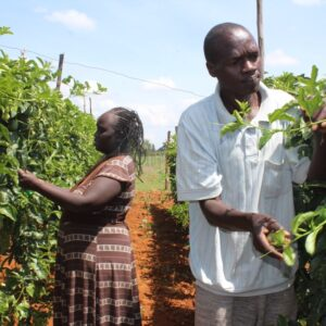 Teachers' Hope to Benefit From MARKUP in Passion Fruits Farming