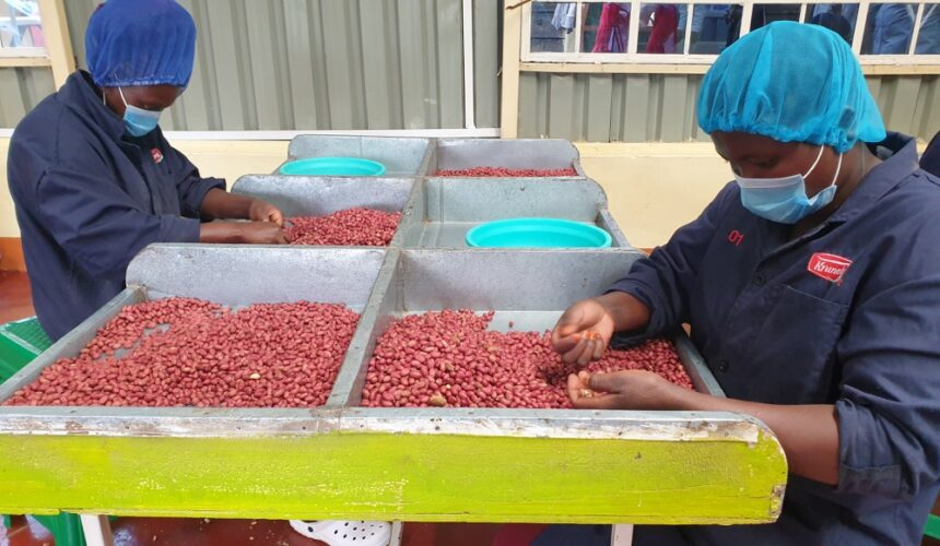 Here is a Ready Market for Groundnuts Farmers