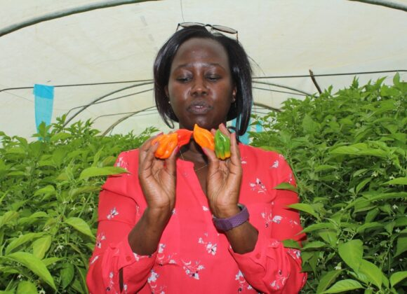 MARKUP Kenya to Support Chilli Value Chain