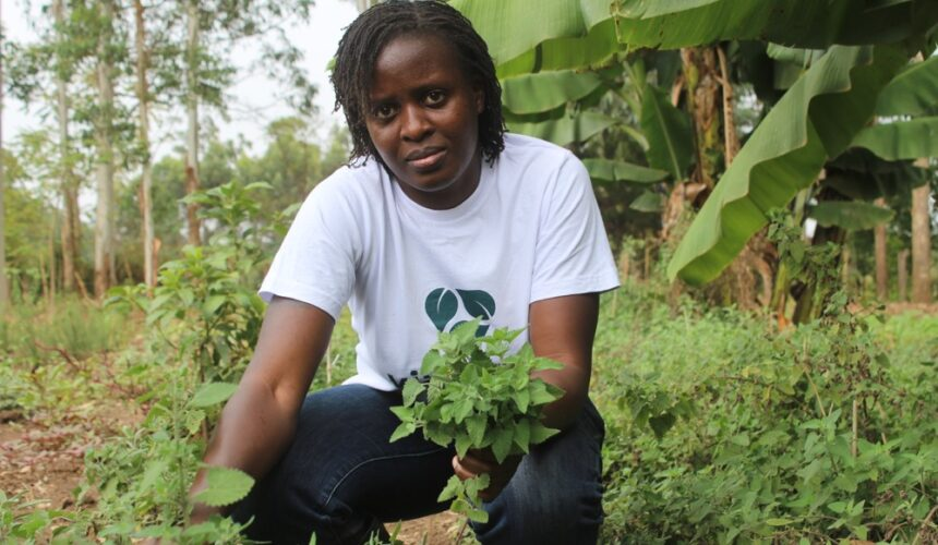 Youthful Woman Thrives in Herbs Production